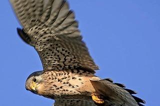 Vögel des Frühsommers im Naturschutzgebiet Feldberg