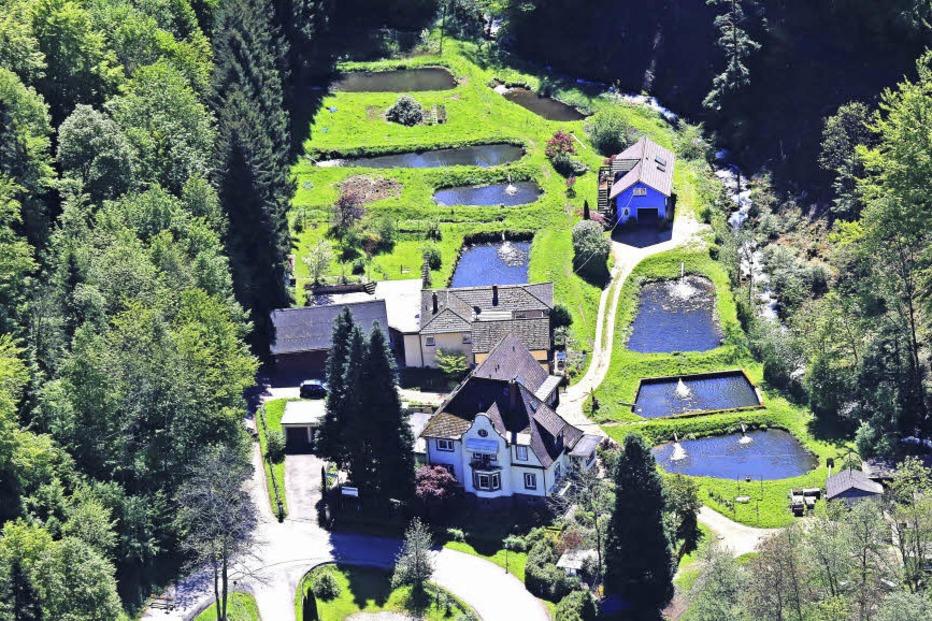 Forellenzucht Günther (Schweighof) - Badenweiler