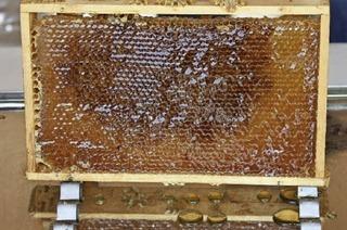 Honigschleudern im Tierpark Lange Erlen in Basel