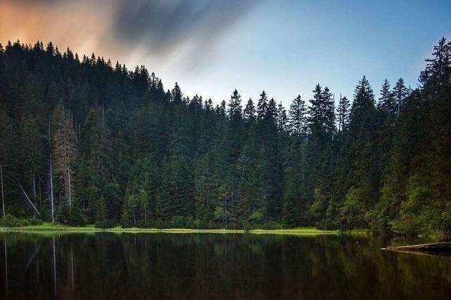 Im Nationalpark Schwarzwald gibt es unbegradigte Natur