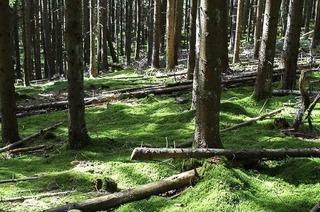 """""""Waldbaden"""": Japan-Trend kommt im Schwarzwald an"""