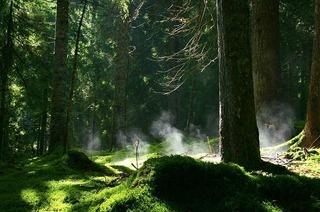 Zauberwald-Pfad im Naturschutzgebiet Taubenmoos