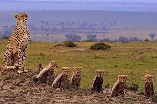 Der Gepardenmann beim Filmgespräch