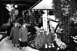 Wie die Geschichte der Lahrer Chrysanthema begann