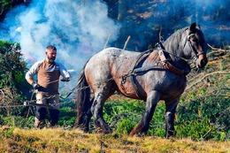 Fotos: Landschaftspflegetag des Schwarzwaldvereins am Baldenweger Buck