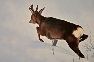 Ausstellung Tiere und Landschaften ab 5. November