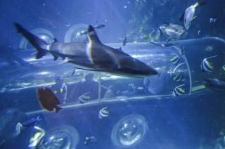Im Sealife im Konstanz gibt's Einblick ins Leben unter dem Meer