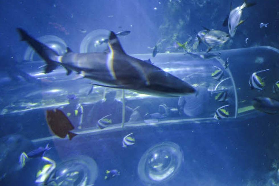 Im Sealife in Konstanz gibt's Einblick ins Leben unter dem Meer - Badische Zeitung TICKET