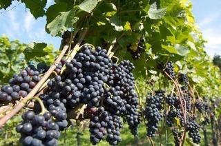 Weingut Rebschneckle