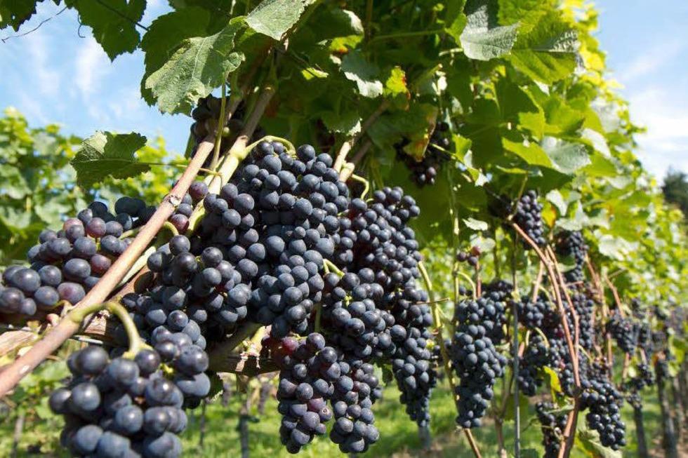 Weingut Rebschneckle - Ihringen