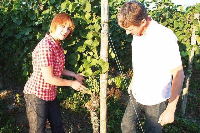 Weingut Mößner-Burtsche (Köndringen)