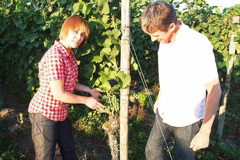 Weingut Mößner-Burtsche (Köndringen) - Teningen