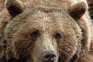 Bärenpark und Nationalpark feiern