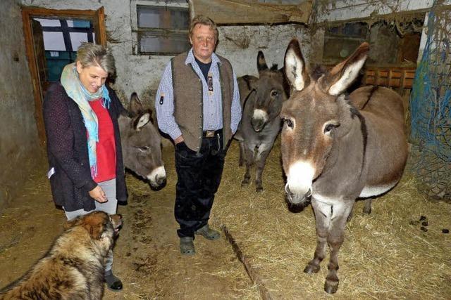 Hinter der Stalltür von Familie Ganter in March leben drei Esel