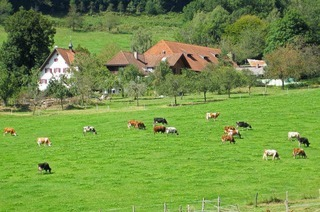 Gullerhof