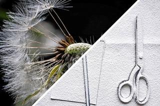 """Ausstellung """"Makro & Kunst"""" der Fotografischen Gesellschaft Dreiland in Weil am Rhein"""