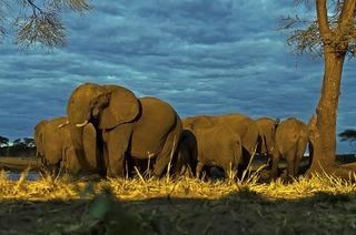 Tierreichtum und Artenvielfalt in Botswana