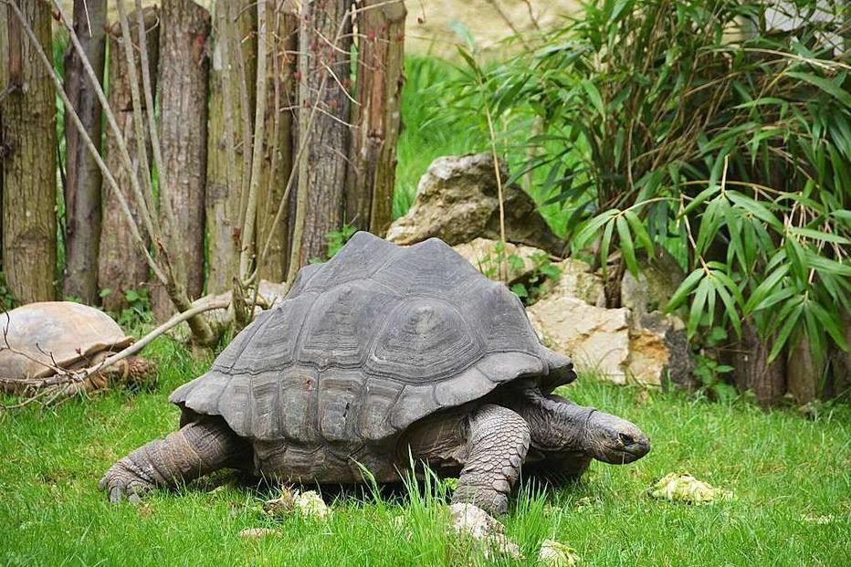 Zoo Mulhouse - Mulhouse (F)