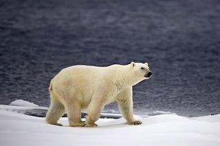 """Greenpeace präsentiert Markus Mauthes Multivisionsshow """"Naturwunder der Erde"""" in Rheinfelden"""