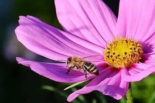Wie wir den Wildbienen helfen können – und warum wir das tun sollten