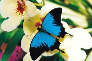 Jardins des Papillons (Schmetterlingsgärten)