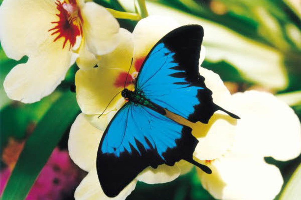Jardins des Papillons (Schmetterlingsgärten) - Hunawihr