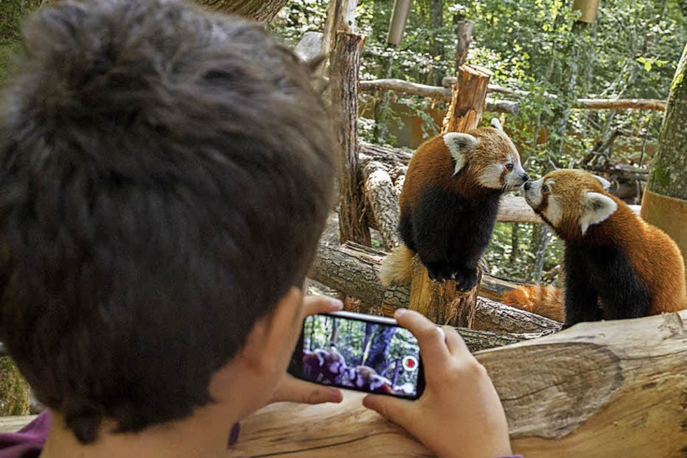 Parc animalier de Sainte-Croix - Rhodes