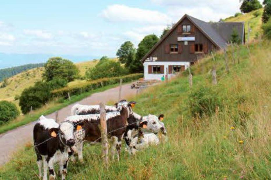 Ferme Auberge du Buchwald - Wasserbourg