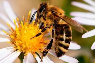 Kräuterstube Bienenhof Alpenblick