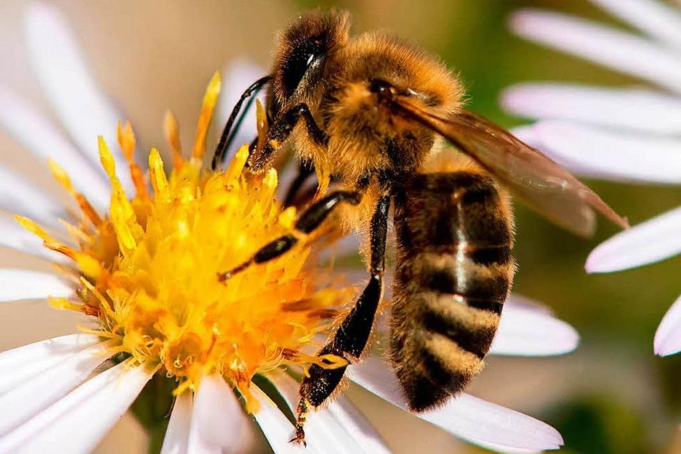 Kräuterstube Bienenhof Alpenblick - Zell im Wiesental
