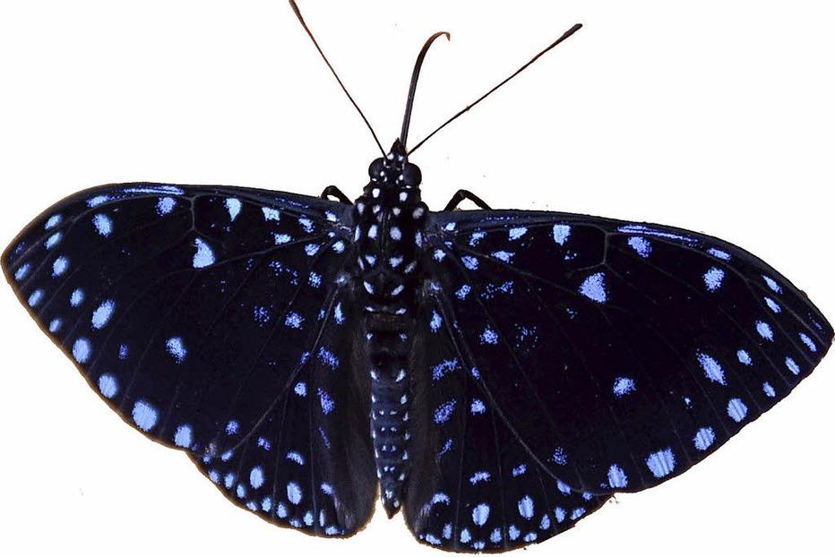 Schmetterlingsgarten Hunawihr - Badische Zeitung TICKET