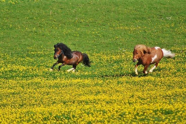 Ponyclub Offenburg (Hildboldsweier)