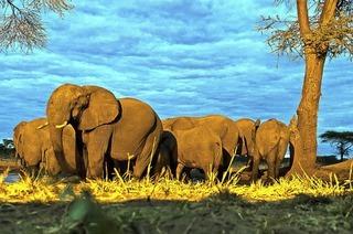 Wolfgang Bauer spricht über Botswana in Bad Bellingen