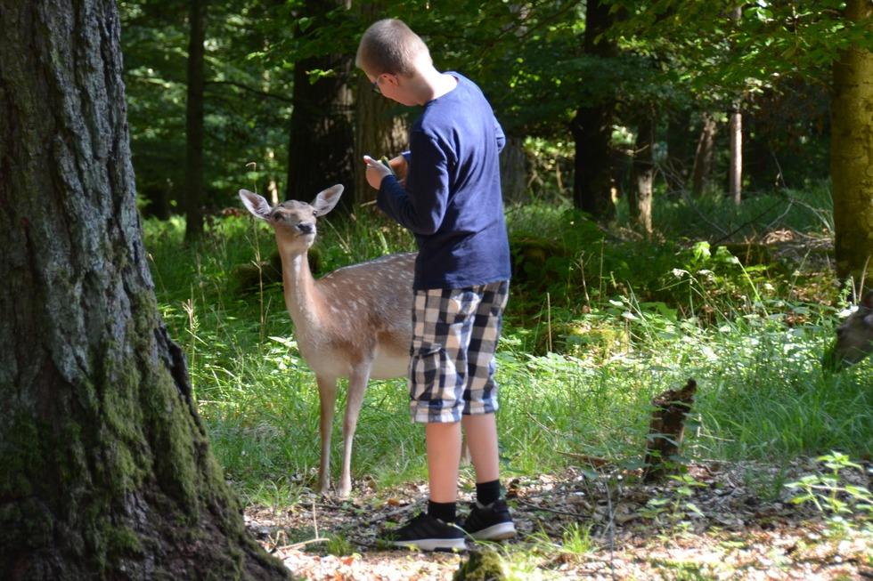 Wild- und Freizeitpark Allensbach - Allensbach
