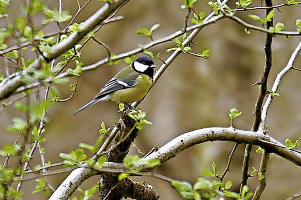 Exkursionen zum Tag der Artenvielfalt - Badische Zeitung TICKET