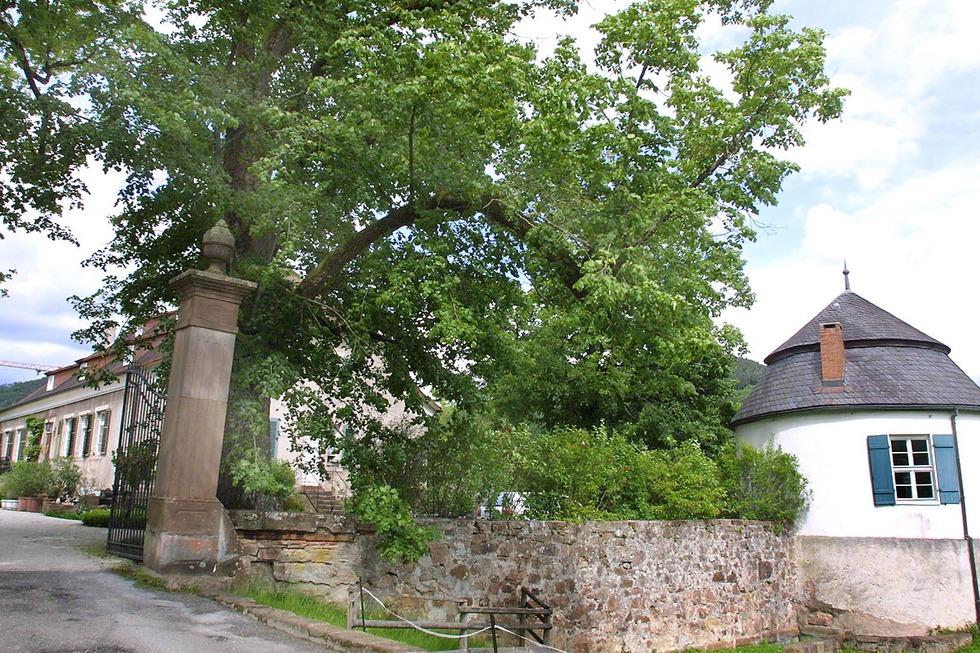 Schloss Dautenstein - Seelbach