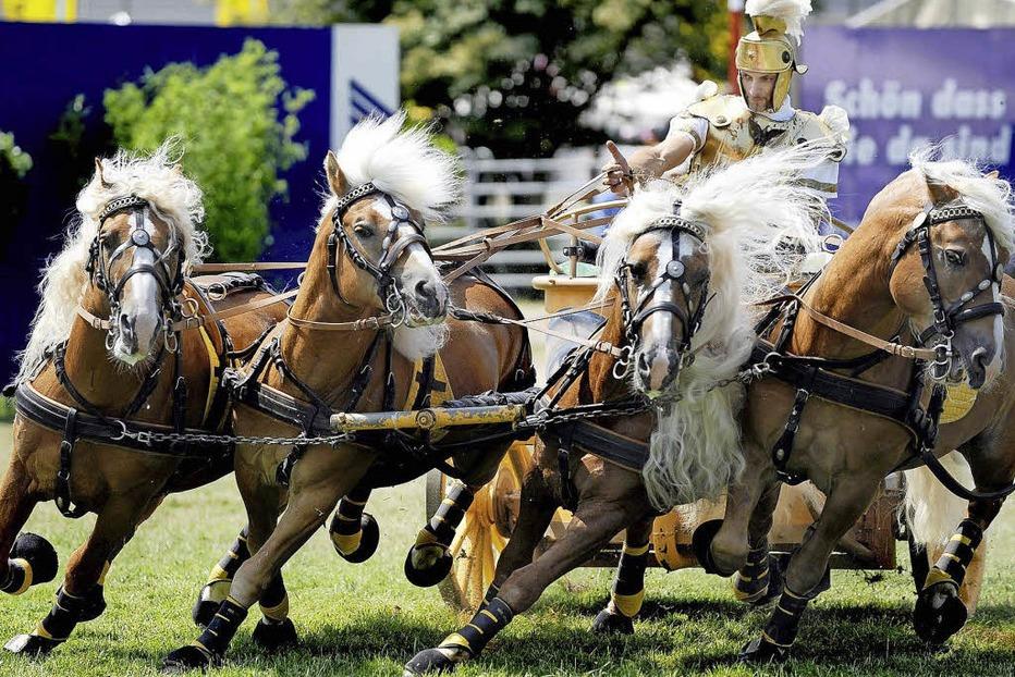 Internationale Pferdemesse in Offenburg - Badische Zeitung TICKET