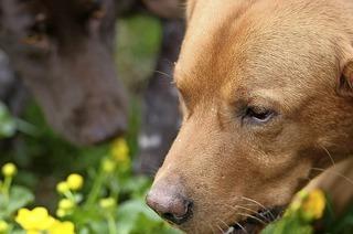"""Corinna Filia """"Heilpflanzen für Hunde"""" und andere Haustiere in Feldberg"""