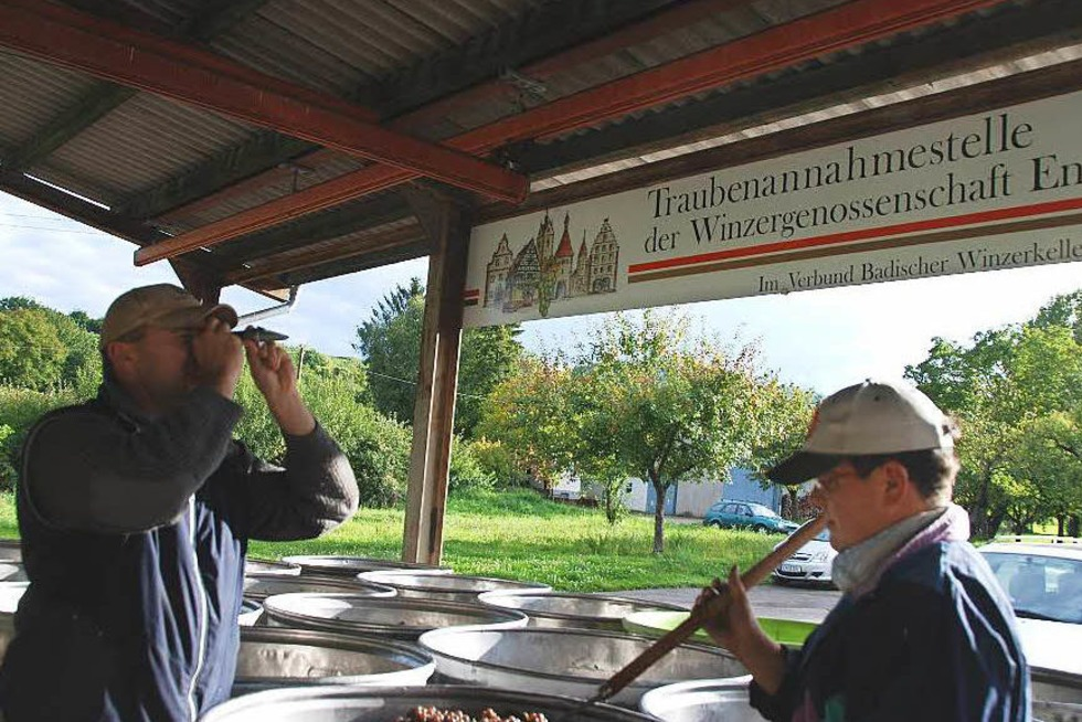 Traubenannahmestelle im Schambachtal - Endingen