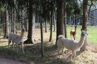 Tatzmania Zoo und Tiergehege