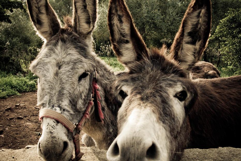 Eselwandern auf dem Luppachhof - Bouxwiller