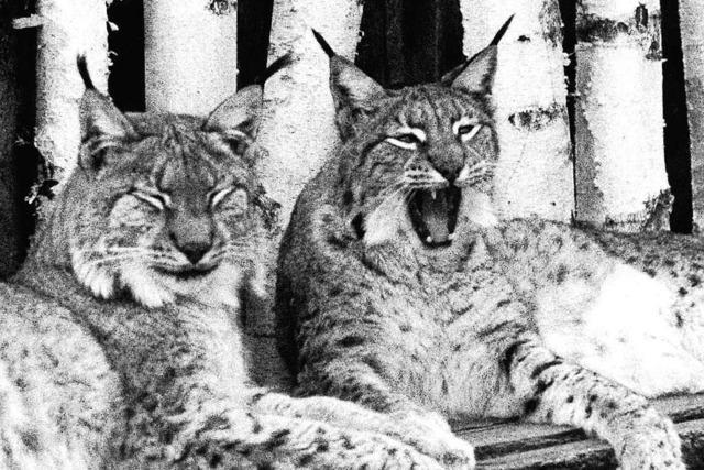 Auf dem Mundenhof gab es mal Luchse – und Pumas
