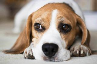 Beaglespielplatz (Connys Hundeschule)