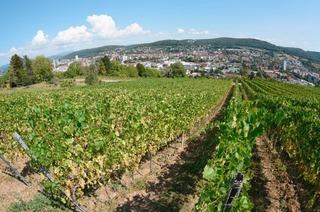 Tüllinger Berg (Lörrach)