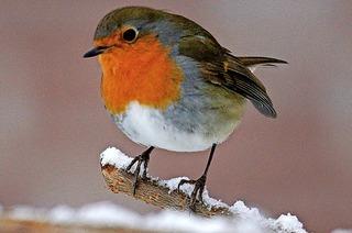 Truz und VHS Weil laden Kinder und Erwachsene ein zur Entdeckungsreise in die Welt der heimischen Singvögel