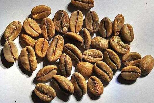 Elephant Beans