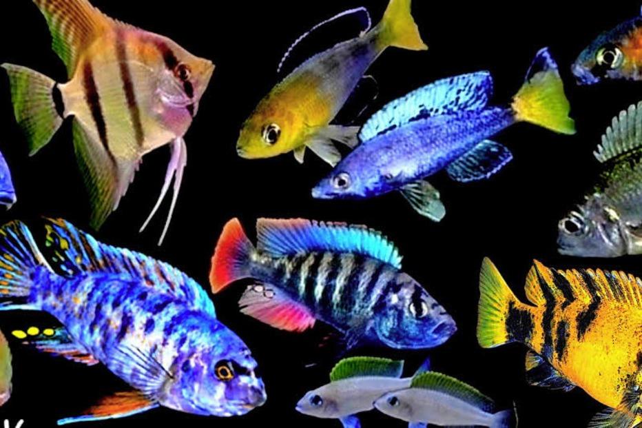 bunte vielfalt in den aquarien der fisch borse in freiburg st georgen