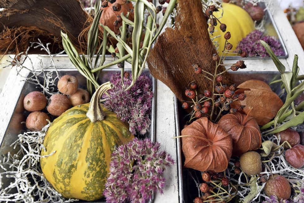 Herbst- und Kürbisfest auf dem Gelände des Freiburger Tiergeheges - Badische Zeitung TICKET
