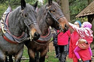 Umweltbildung zu Holzwirtschaft mit Pferden und Maschinen der Stiftung Waldhaus vor den Toren der Stadt