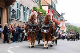 Fotos: Impressionen vom Herbstausklang in Ihringen